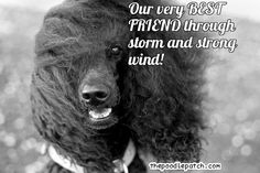 The Poodle Patch — OUR VERY BEST FRIEND THROUGH STORM AND STRONG...