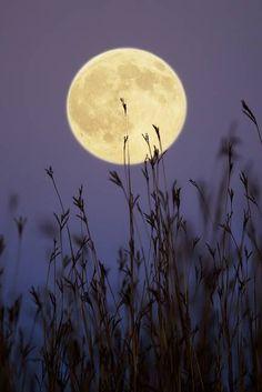 Hunters Moon 2 by Jim Crotty