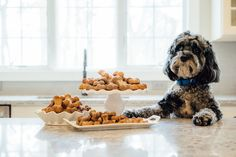 Sheldon, a old Cockapoo, shares his adventures as the new Chief Tasting Officer of My Dog Bake Shop. The Shop bakes handmade, all natural dog treats. Natural Dog Treats, Baking, Patisserie, Backen, Bread, Bakken, Pastries