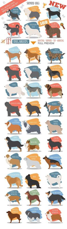 All world DOG BREEDS in one set by design shop on @creativemarket