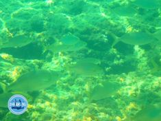 - Zorbas Island apartments in Kokkini Hani, Crete Greece 2020 Crete Greece, Golf Courses, Island, Islands