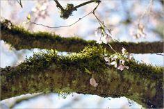Springtime In Seattle at the Washington Park Arboretum