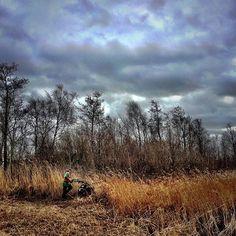 Rietsnijder #weerriben #winter #staatsbosbeheer #nature #dutch_connextion