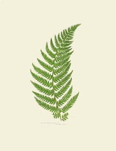 Fern Botanical Print Collection | Scribd