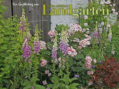 Fingerhut, Mein schoener Landgarten