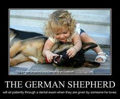 German Shepherd Dental Exam    reminds me of Tori & sniper (rip)