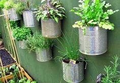 Growing Culinary Herbs Indoor WooHoo!
