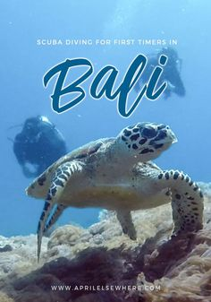 Looking to try diving for the first time? This guide to Scuba Diving in Nusa Penida, Bali may be just what you're looking for | Try diving in Bali | Diving Nusa Penida | Diving Uncertified | Bali Diving Guide | PADI Diving Bali. #bali #scubadiving #diving #padi #nusapenida #trydiving #PADI