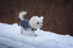 This free sewing pattern for a weatherproof, warm dog coat is easy to make and an economical alternative to buying a dog coat at the pet boutique.