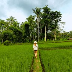Conde Naste Traveller A 20-minute walk from the urban bustle of Ubud, the landscape around the Tegalalang rice terrace confirms Bali's soul-soothing reputation http://www.cntraveler.com/grand-tour-of-asia/bali?MBID=twitter_  #TreasuredTravel