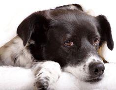 So finden Sie den richtigen Hund von DOG FIT by PreThisⓇ