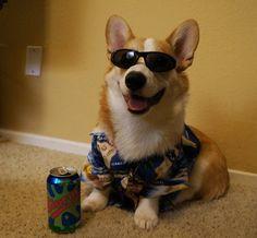 Corgnelius is the chillest dog: | Meet Corgnelius, The Cutest CorgiEver