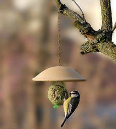 Vögel füttern ganzjährig!