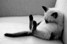 les chats peuvent dormir n'importe où... et n'importe comment !