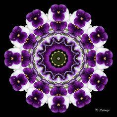 Mandala ''Stiefmütterchen 02''   Kreatives by Petra #mandala #foto #fotographie #naturfotografie #macro #photo #natur #nature #sommer #summer #belvedere #botanischergarten #wien #vienna #blumen #flowers #violett #lila #weiss #white #stiefmütterchen #pansy #garten #garden Petra, Photoshop, Brooch, Canon, Jewelry, Mandalas, Lilac, Photos, Planting Flowers