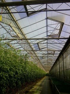D-FUSE vegetable at tomatoes. Ideal light distribution, no shadow, equal light level.