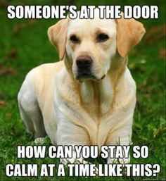 Someone's At The Door....!