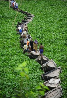 A walk across a floating boat bridge on the Buriganga river in Dhaka. Water hyacinth has hampered the movement of boats on the river so boats are tied together to form a temporary bridge. (by Munir Uz Zaman)