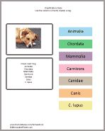 Practice classification using these cards. They are color coded to match the cards in the printable above so students know which label is a kingdom, phylum, class, order, family, genus or species name.