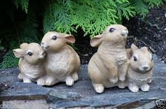 I love rabbits, these are just the cutest!