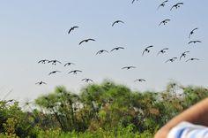 Erlebnisreiche Fußsafari im Norden Tansanias Safari, Island, Islands