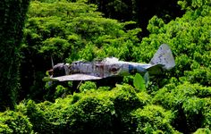 A Japanese fighter still supported by the canopy of trees where it crash-landed during World War II in Papua, New Guinea