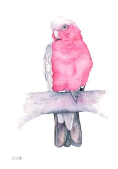 Galah watercolour painting, G11316, A4 size, Galah print, parrot watercolor painting, Australian bird watercolour, parrot painting