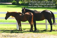 horse quotes inspirational | jan 17 sayings quotes author unknown hannah mayes on january 17th 2011