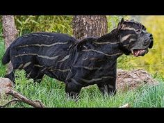 4c878d60fdc4f6 Here Are 20 Rare And Beautiful Dog Breeds That You've Probably Never Hea.