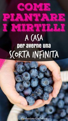 #coltivareacasa #mirtilli #faidate #diy #evoluzionecollettiva