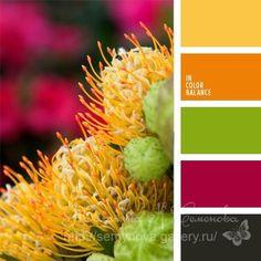 (1) Gallery.ru / Фото #169 - сочетание цвета оттенки желтого и оранжевого - semynova