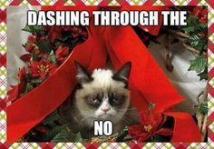 Dashing through the....no
