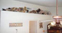 stuffed animal shelf Big Girl Bedrooms, Girls Bedroom, Bedroom Ideas, Storing Stuffed Animals, Stuffed Animal Storage, Hearth And Home, Just Go, Shelf, Photo Wall