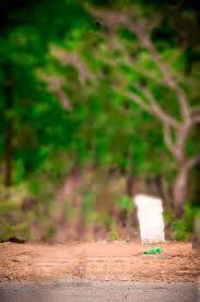 Image Result For Garden Blur Background Hd Travel Picsart