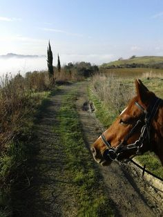 View while #Horseback riding in #Tuscany with La Fiaba http://la-fiaba.com