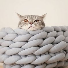 7,398 отметок «Нравится», 134 комментариев — Anna Mo. Chunky Knits (@ohhio) в Instagram: «Here's what making a chunky cat bed with Ohhio Braid looks like. You can see the full hand-…»
