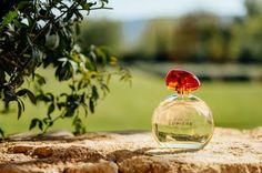Olhares: L'Occitane apresenta fragrância aromática gourmand...