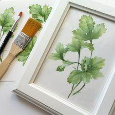 watercolor basil & coriander by Natalia Tyulkina, via Behance