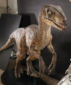 This full-scale maquette of the fearsome Velociraptor was created as a paint study for the cunning pack-hunting dinosaur characters brought to life in the first Jurassic Park film. Description from liveauctionworld.com. I searched for this on bing.com/images