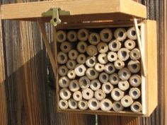 Cigar box and bamboo bee box. finally a re-use project with something i actually have to re-use.