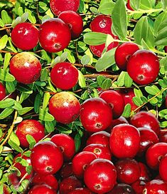 Cranberry Mood Colors, Color Palate, Color Of Life, Dream Garden, Fresh Fruit, Berries, Cherry, Healthy Recipes, Apple