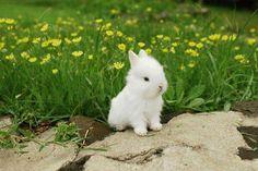 Tavşan yavrusu ve sonsuz tatlılık... pic.twitter.com/SIeHmHbqHG