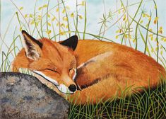 Online store of Galway artist Pat Flannery. Paintings of Irish and Galway scenes, animals, landscapes, people, and everything in between! Dachshund Art, Fox Art, Artist Gallery, Red Fox, Illustration Art, Vintage Illustrations, Pencil Art, Watercolour Painting, Wildlife