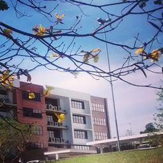 Bem-vinda, Primavera #flores #câmpus #prédio12  http://instagram.com/p/tS8T3nJx_q/?modal=true