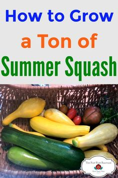 How to grow a ton of summer squash for your best harvest ever. Summer squash is an easy to grow vegetable for your home garden. Organic Fertilizer, Organic Gardening, Gardening Tips, Vegetable Gardening, Easy Vegetables To Grow, Types Of Vegetables, Veggies, Summer Squash, Types Of Squash Summer