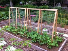 25 Eye-Catching DIY Trellis Ideas For Your Garden A garden trellis is an excellent way to support plants and flowers while adding structure and decorative flair to your landscape. Bean Trellis, Tomato Trellis, Cucumber Trellis, Diy Trellis, Garden Trellis, Trellis Ideas, Pole Beans Trellis, Arch Trellis, Potager Garden