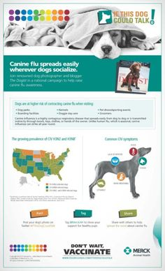 Canine influenza virus or dog flu, is a contagious respiratory disease in dogs. There are two strains of the canine influenza virus, H3N2 and H3N8.