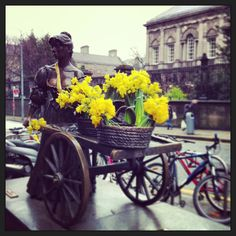 Molly Malone - Dublin Daffodil day for Irish Cancer Society Daffodil Day, Molly Malone, Daffodils, Dublin, Baby Strollers, Ireland, Irish, Cancer, Baby Prams