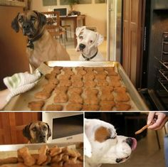 Homemade Flax Seed Dog Biscuits | How To Make Dog Treats | 21 Healthy Recipes Of Homemade Dog Treats