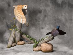 Barn Owl & Common Grackle Created using tupelo wood and acrylic paint. Artist:  Gilles Prud'homme
